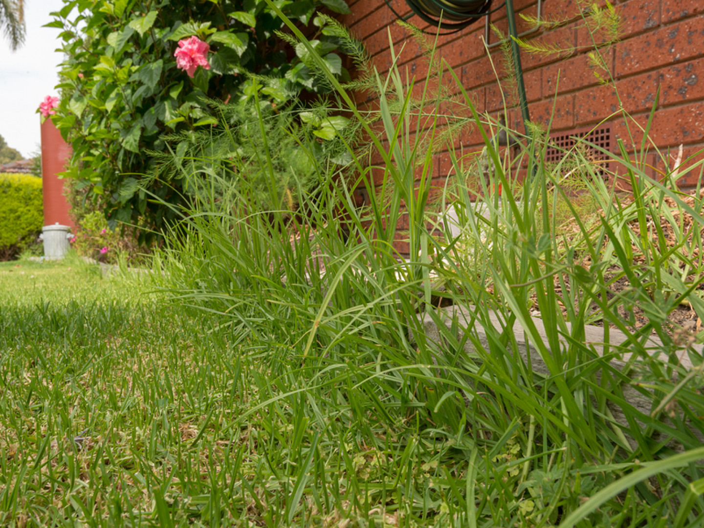 Prevent Weeds From Choking Out Your Grass With Weed Control Services