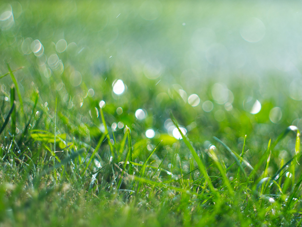 Is your lawn ruining your property's appeal?